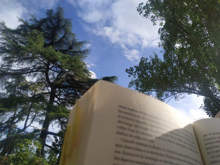 foto libro leer cielo árboles